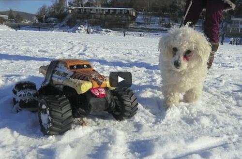 Jak jsme venčili psi na brněnské přehradě